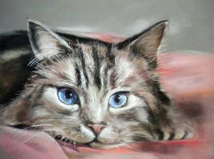 chat-regard-bleu-pastelcard