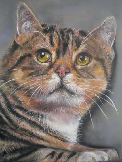 chat tigré 40X60 pastelmat