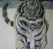 tigre blanc mixte 60x73