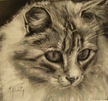 chat coco  pastel 25x20 2