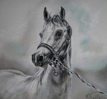 cheval gris 40x40 pastelmat