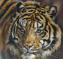 tigre pastel mat 80x80