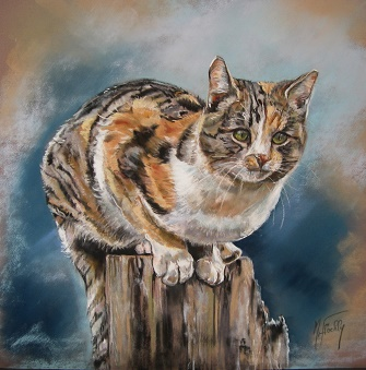 chat perch pastel 40 40 marylise froehly artiste peintre animalier. Black Bedroom Furniture Sets. Home Design Ideas