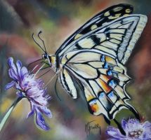 Papillon machaon pastel 40x40 site