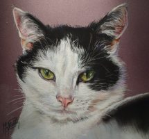chat blanc et noir pastel 30x30