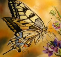 machaon -pastel -30x30 site