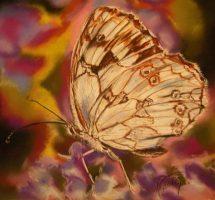 papillon2 pastel 40x40