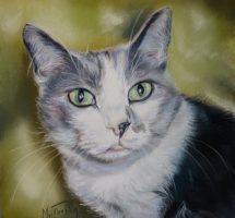 chat d'Audrey 20x20 Camaille