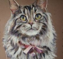 chat marie maincoon 24x30