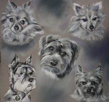 chiens de Sylvie 40x40 noir et blanc