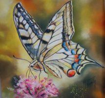 Machaon - pastel 30x30- mai 2017