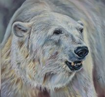 OURS POLAIRE -PASTEL CARD 60X60 -