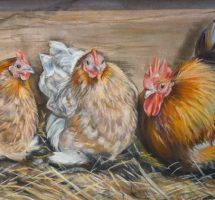 trois poules