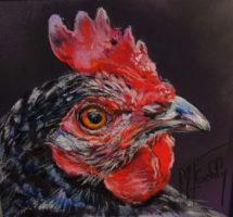 portrait poule 15x15 aout17