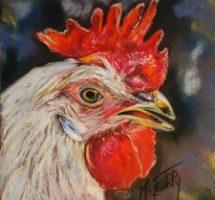 portrait coq blanc 15x15