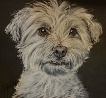 Jezabel chien de Valerie 30x30