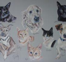 les huit chats et chiens d'Aurore - pastel 70x50 -fev18