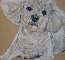 looki chien d'Audrey pastel 24x30