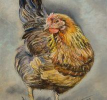 poule 20x15fev18