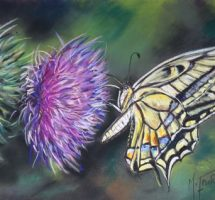 papillon machaon - pastel 35x25 - mars18