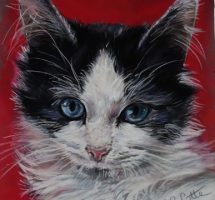 Echalotte, chat de Carla 24x30 oct 18site