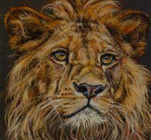 lion janv19 25x25site