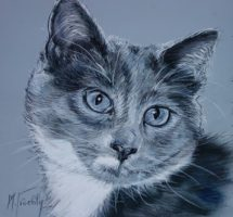 Chat Canaille pastel 20x20