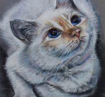 Chat blanc Bijou oct 18 25x25site