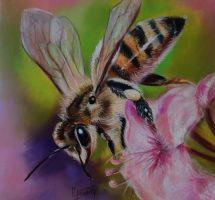 abeille30x30 janv19 n2.jpgsite