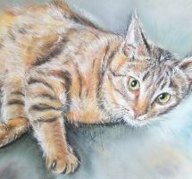 chat lulu 90X70 canson - Copie