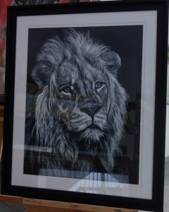 lion 65x85