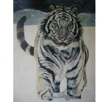 tigre-blanc-mixte-60x731[1]1