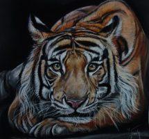 portrait tigre fev19 50x50 pastelmat.jpgsite