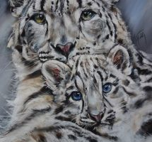 Pantheres des neiges - pastel 70x90 - site